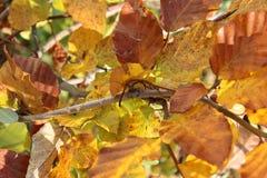 Feuilles d'automne Photo libre de droits