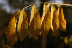 Feuilles d'automne Lizenzfreie Stockfotografie
