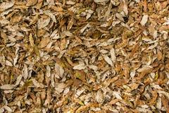 Feuilles d'automne 20 Photo libre de droits