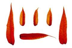 Feuilles d'automne ardentes 2 image libre de droits