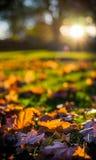 Feuilles d'automne au coucher du soleil Image stock