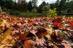 Feuilles d'automne au sol Images libres de droits