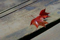 Feuilles d'automne au sol Photographie stock