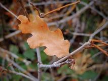 Feuilles d'automne d'Autumn Maple et de chêne étroites dans la forêt sur Rose Canyon Yellow Fork Trail en montagnes d'Oquirrh sur Photographie stock