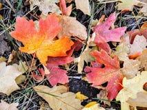 Feuilles d'automne d'Autumn Maple et de chêne étroites sur Forest Floor sur Rose Canyon Yellow Fork et la grande traînée de roche Photos stock