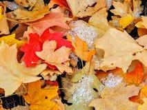 Feuilles d'automne d'Autumn Maple et de chêne étroites sur Forest Floor sur Rose Canyon Yellow Fork et la grande traînée de roche Photographie stock libre de droits