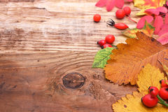Feuilles d'automne avec des baies Photographie stock