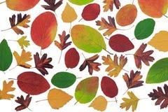 Feuilles d'automne avec différents arbres sur un fond blanc. Image stock
