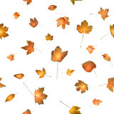Feuilles d'automne avec rougeoyer de retour léger Photos stock