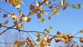Feuilles d'automne balançant dans le vent banque de vidéos