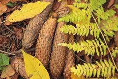 Feuilles d'automne, cônes, fougère images libres de droits