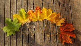 Feuilles d'automne changeant la couleur Photographie stock