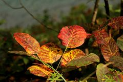 Feuilles d'automne colorées au parc national de lacs Plitvice image libre de droits