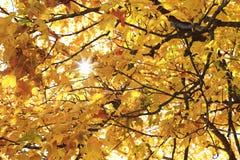 Feuilles d'automne colorées avec briller du soleil Image stock