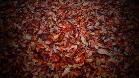 Feuilles d'automne colorées couvrant la terre Photographie stock