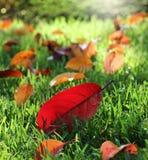 Feuilles d'automne colorées en parc ensoleillé Photos stock