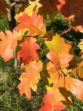 Feuilles d'automne colorées et herbe verte Photographie stock