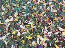 Feuilles d'automne colorées sur la terre, Lithuanie Photo libre de droits