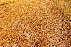 Feuilles d'automne colorées sur le trottoir en pierre Photographie stock libre de droits
