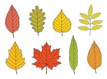 Feuilles d'automne colorées tirées par la main réglées Images libres de droits