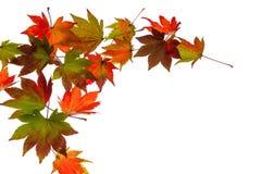 Feuilles d'automne colorées Photographie stock