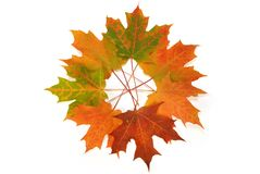 Feuilles d'automne colorées. Photo stock