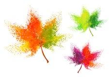 Feuilles d'automne colorées, ensemble de vecteur Images stock