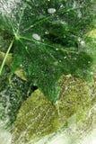 Feuilles d'automne congelées Image libre de droits