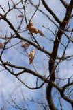 Feuilles d'automne contre la lumière du soleil Photographie stock