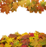 Feuilles d'automne d'isolement sur le blanc Photographie stock libre de droits