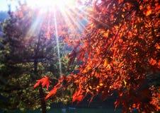 Feuilles d'automne dans Arashiyama, Kyoto, Japon Photos libres de droits