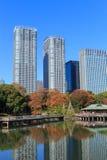 Feuilles d'automne dans des jardins de Hamarikyu, Tokyo Image stock