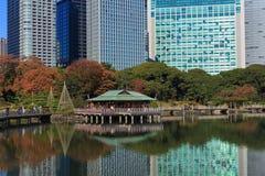 Feuilles d'automne dans des jardins de Hamarikyu, Tokyo Photo libre de droits