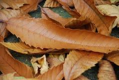 Feuilles d'automne dans Kent Photo stock