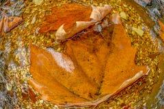 Feuilles d'automne dans l'eau, plan rapproché photographie stock