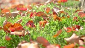 Feuilles d'automne dans l'herbe banque de vidéos