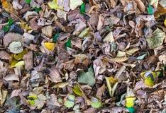 Feuilles d'automne dans la zone de parc Photographie stock libre de droits