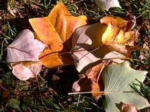 Feuilles d'automne dans le pré Photographie stock