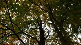 Feuilles d'automne dans le vent banque de vidéos