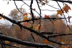 Feuilles d'automne dans les bois Photos stock