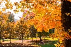 Feuilles d'automne dans lumineux Photo stock