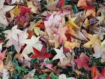 Feuilles d'automne dans un jardin français photos libres de droits