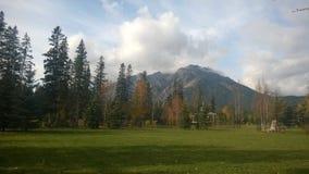 Feuilles d'automne de Banff sur l'herbe Images libres de droits
