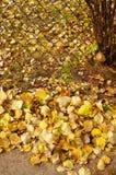 Feuilles d'automne de barrière photo stock