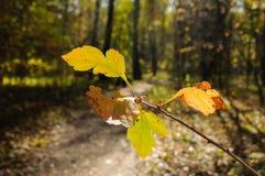 feuilles d'automne de couleur beaucoup Image libre de droits