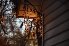Feuilles d'automne de saisons et lumières de Noël changeantes Photographie stock