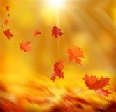 Feuilles d'automne en baisse Photographie stock libre de droits