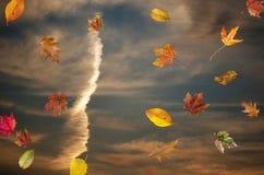 Feuilles d'automne en baisse au coucher du soleil Photos libres de droits