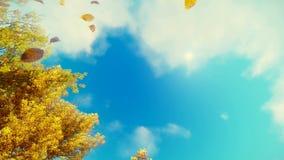 Feuilles d'automne en baisse et fond de ciel bleu clips vidéos