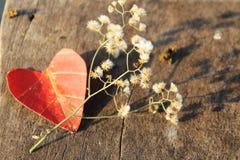 Feuilles d'automne en forme de coeur Photographie stock libre de droits